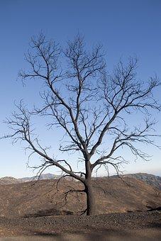 Tree, Landscape, Nature, Outdoors, Wood, Burnt