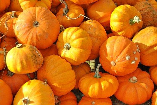 Pumpkin, Halloween, Fall, Thanksgiving, Squash Vine