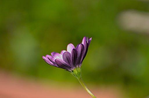 Nature, Flower, Flora, Garden, Leaf, Summer, Bright