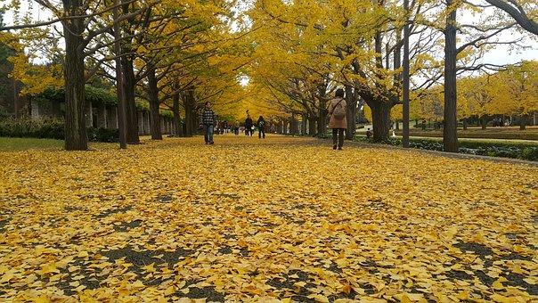 Autumn, Leaf, Nature, Garden, Botanical, Tokyo