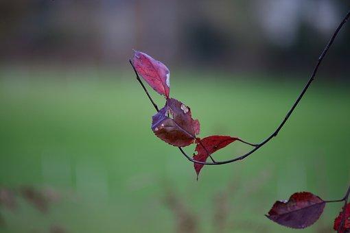 Nature, Leaf, Plant, Summer, Garden, Botany, Fields