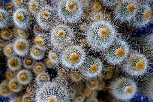 Nature, Background, Color, Plant, Close, Pattern