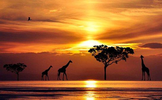 Sunset, Dawn, Silhouetted, Dusk, Sun, Silhouette