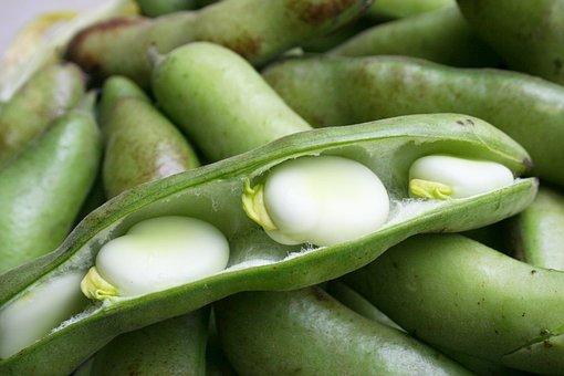 Legumes, Pod, Vegetable, Food, To Grow, Beans, Peas