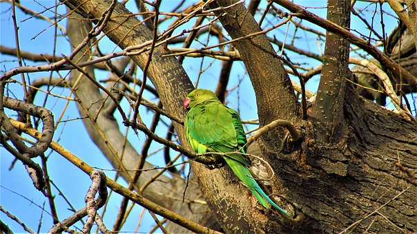 Tree, Nature, Birds, Wood-fibre Boards, Wildlife