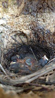 Nature, Animalia, Tree, Wood, Birds, Nest, Wildlife