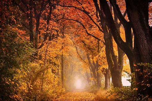 Tree, Autumn, Nature, Leaf, Wood, Avenue, Forest, Away
