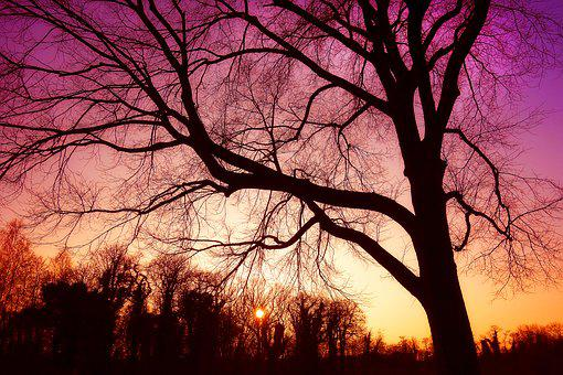 Tree, Bare Tree, Bare Branches, Silhouette, Nature
