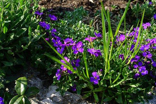 Blue Pillow, Flower, Blossom, Bloom, Violet