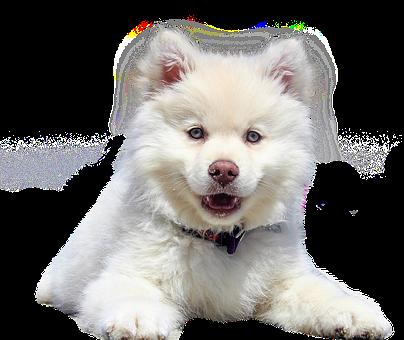 Dog, Isolated, Animal, White, Purebred Dog, Pet, Dear