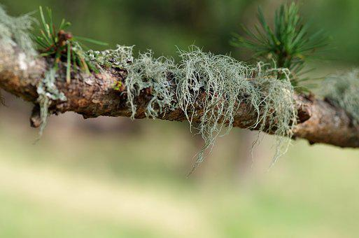 Nature, Tree, Leaf, Environment, Close, Lichen, Branch