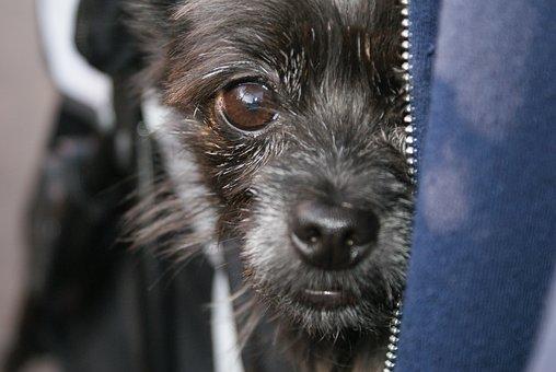 Dog, Mammal, Animal, Pet, Canine, Portrait, Cute, Puppy