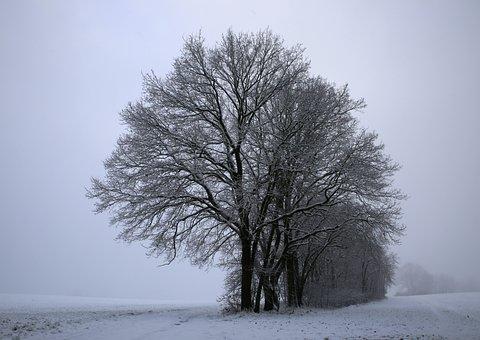 Mati, Winter, Snow, Frost, The Fog, Cold, Landscape