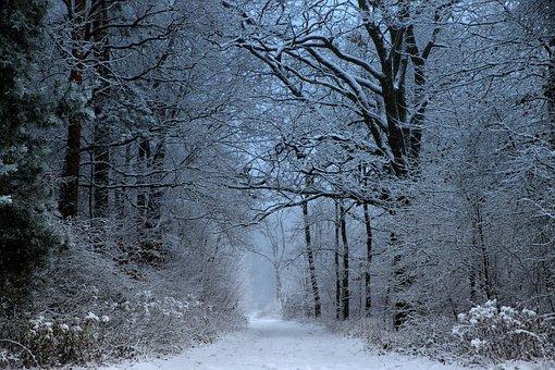 Mati, Winter, Snow, Frost, Cold, Tree, Ice, Freezers