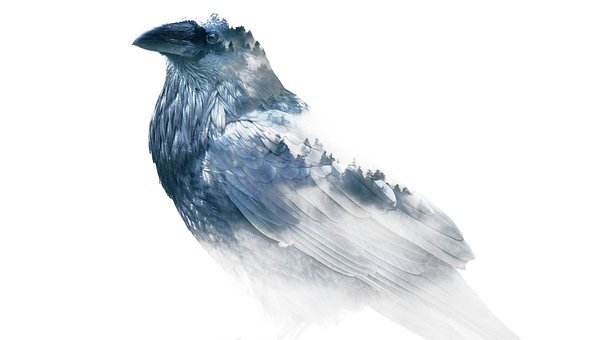 Raven, Winter, Nature, Corbie, Snow, Cold, Animal