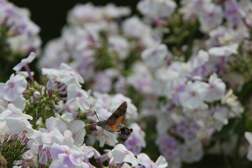 Flower, Plant, Garden, Nature, Fulfillment