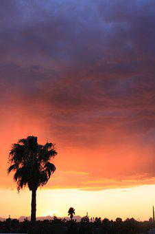 Sunset, Dusk, Nature, Dawn, Outdoors, Silhouette, Palm