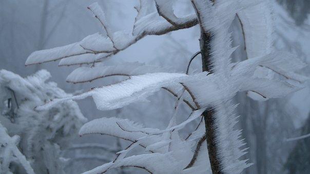 Winter, Priroda, Snow, The Fog, Icing