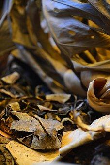Nature, Gift, Gabon Viper, Toxic, Viper, Snake
