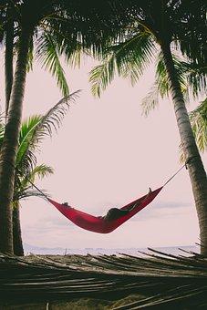 Palm, Tropical, Tree, Beach, Nature, Travel, Island