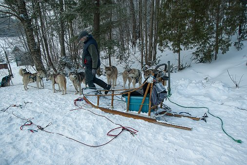Hitch, Sled Dogs, Sled, Snow, Winter, Forest