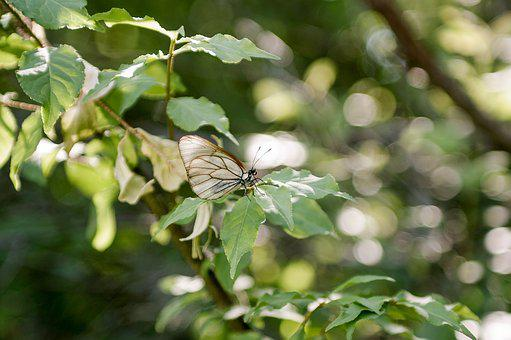 Sheet, Nature, Plant, Outdoors, Tree, Butterfly, Insect