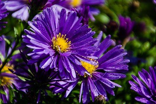 Nature, Flower, Plant, Garden, Summer, Color, Flowers