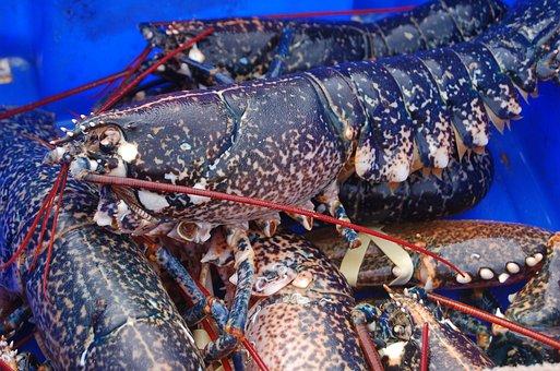 Seafood, Crustacean, Lobster, Fish, Shellfish
