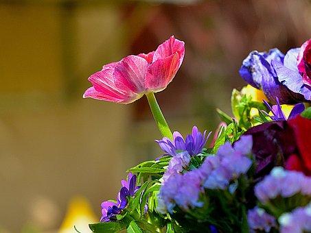 Flower, Nature, Flora, Garden, Leaf, Summer, Floral
