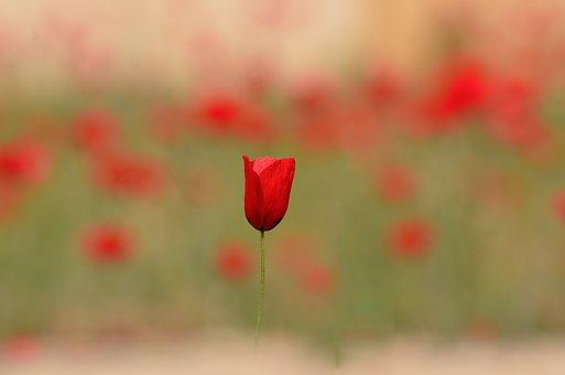 Nature, Flower, Flora, Summer, Field, Green, Plant