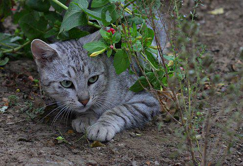 Cat, Hidden, Flowers, Funny, About