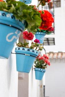 Granada, Albaicin, Albayzin, Flower, Flowerpot, Summer