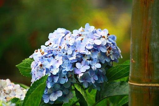 Nature, Flower, Leaf, Flora, Garden, Closeup, Branch