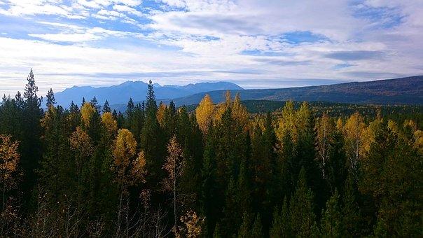 Nature, Wood, Tree, Landscape, Fall, Season, Leaves