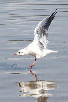 Bird, Animal World, Waters, Nature, Animal, Sea
