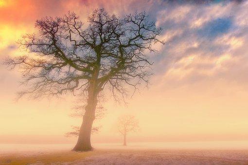 Sunset, Dawn, Nature, Sun, Sky, Dusk, Landscape, Tree