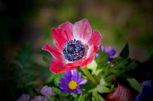Flower, Flora, Nature, Garden, Leaf, Summer, Floral