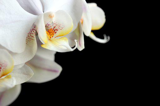 Flower, Plant, Nature, Color, Bright, Orchid, White