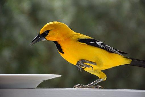 Birds, Wildlife, Nature, No Person, Outdoor, Yellow