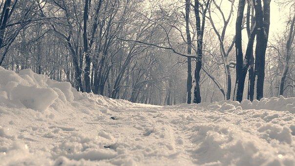 Park, Snow, Footprints, Path