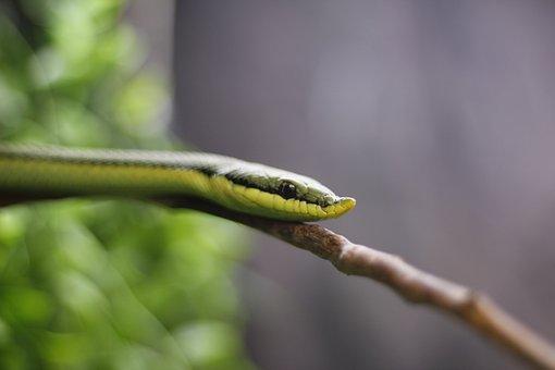 Nature, Snake, Wild Life, Reptilia, Reptile
