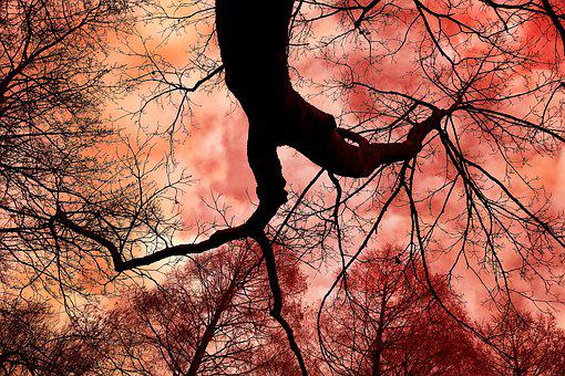 Tree, Tree Top, Trunk, Rising Up, Silhouette