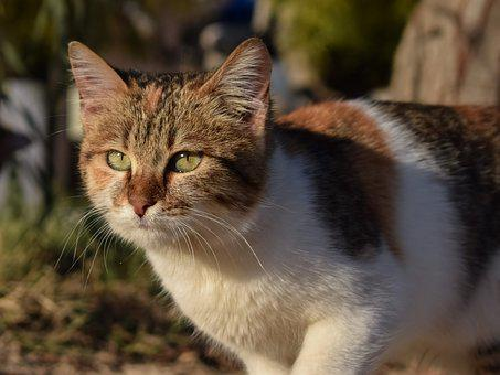 Cat, Stray, Animal, Cute, Face, Eyes, Street, Portrait