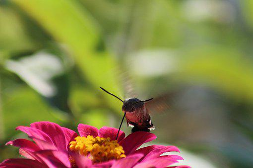 Nature, Flower, Insect, Summer, Outdoors, Plant, Bright