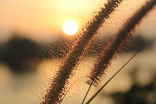 Morning Light, Surat Thani, The Air, Morning, Light