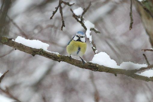 Nature, Tree, Bird, Outdoors, Living Nature, Season