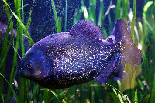 Underwater, Aquarium, Fish, Waters, Nature