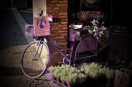 People, Wheel, Basket, Bike, Outdoors, Flower, Ride