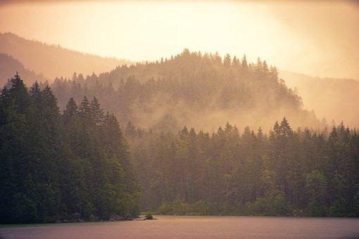 Fog, Dawn, Tree, Sunset, Wood, Forest, Haze, Lake