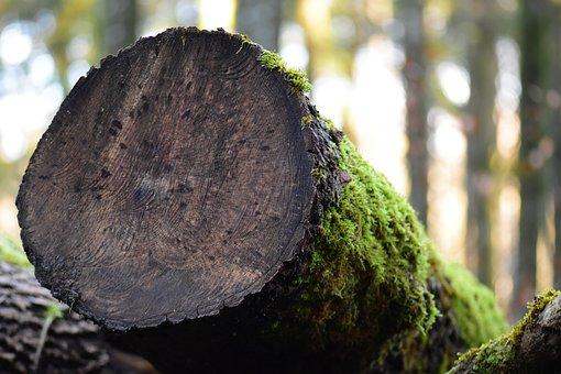Wood, Tree, Nature, Tribe, Moss, Green, Gloomy, Log